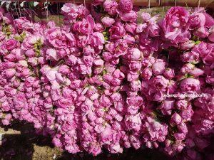 Розово масло от цветовете на Роза Дамасцена